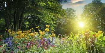 Gartenidyl-Blumen